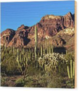 Sonoran Cacti Everywhere Wood Print