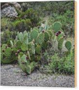 Sonoran Cactus Wood Print