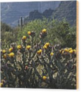 Sonoran Desert Cholla  Wood Print