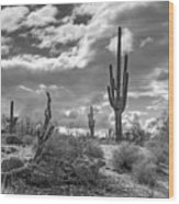 Sonoran Desert In Black And White  Wood Print