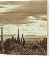 Sonoran Desert Mountains And Cactus Near Phoenix Wood Print