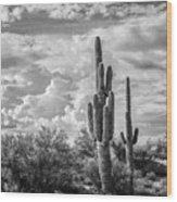 Sonoran Desert View Wood Print