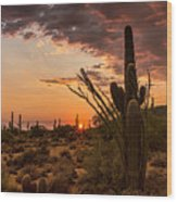 Sonoran Summer  Wood Print
