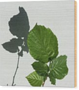 Sophisticated Shadows - Glossy Hazelnut Leaves On White Stucco - Vertical View Upwards Left Wood Print