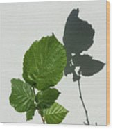 Sophisticated Shadows - Glossy Hazelnut Leaves On White Stucco - Vertical View Upwards Right Wood Print