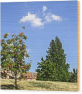 Sorb-tree Wood Print