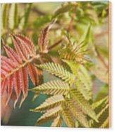 Sorbaria Sorbifolia Spring Foliage Wood Print