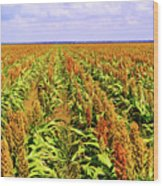 Sorghum Plants Fields In Botswana Wood Print