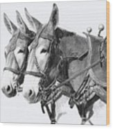 Sorrel Mule Team Wood Print