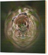 Sorry Said The Frog 1 Wood Print