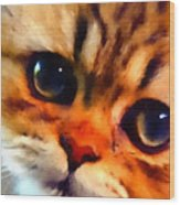 Soulfull Eyes Kitten Portrait Wood Print