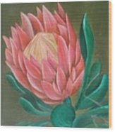 South Africa Protea Wood Print