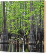 South Carolina Low Country Wood Print