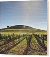 South Napa Valley Morning Wood Print