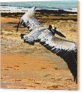 South Padre Pelican Wood Print