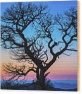 South Rim Tree Wood Print