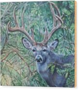 South Texas Deer In Thick Brush Wood Print