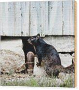 South Texas Squirrel Wood Print
