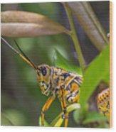 Southeastern Lubber Grasshopper Wood Print