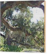 Southern Backyard Wood Print