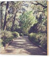 Southern Beauty 2 - Tallahassee, Florida Wood Print