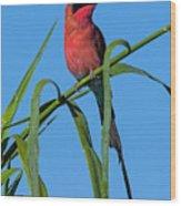 Southern Carmine Bee-eater  Wood Print