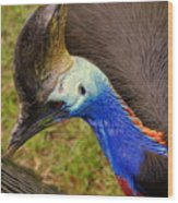 Southern Cassowary Wood Print