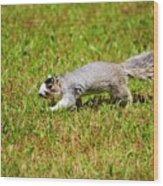 Southern Fox Squirrel Wood Print