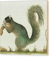 Southern Fox Squirrel Peanut Wood Print