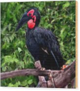 Southern Ground Hornbill Wood Print