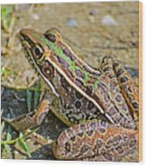 Southern Leopard Frog Wood Print
