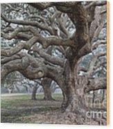 Southern Live Oak Wood Print