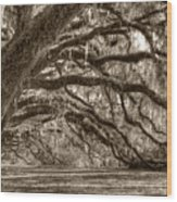 Southern Live Oak Trees Wood Print