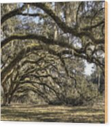 Southern Live Oaks With Spanish Moss Color Wood Print
