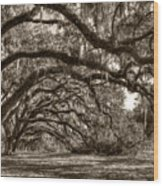 Southern Live Oaks With Spanish Moss Wood Print
