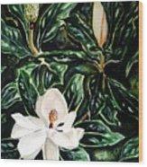 Southern Magnolia Bud And Bloom Wood Print