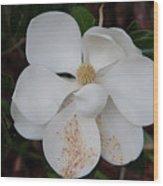 Southern Magnolia Matchsticks Wood Print