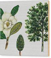 Southern Magnolia Or Bull Bay  Wood Print