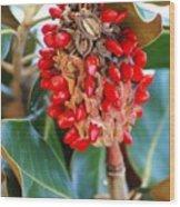 Southern Magnolia Seedpods Wood Print