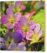 Southern Missouri Wildflowers 1 Wood Print