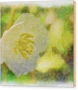 Southern Missouri Wildflowers - Mayapples Bloom - Digital Paint 2 Wood Print