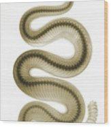 Southern Pacific Rattlesnake, X-ray Wood Print
