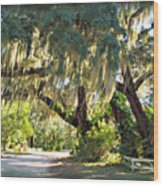 Southern Pathway Wood Print