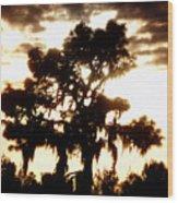 Southern Pine Wood Print