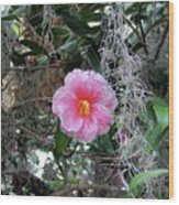 Southern Pink Camellia Wood Print
