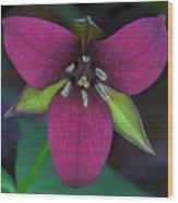 Southern Red Trillium Wood Print