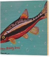 Southern Redbelly Dace Wood Print