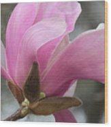 Southern Saucer Magnolia Closeup Wood Print