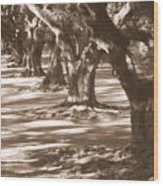 Southern Sunlight On Live Oaks Wood Print