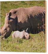 Southern White Rhino With A Little One Wood Print